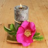 Ljus och enkel rose — Stockfoto