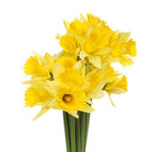 Bunch of daffodils — Stock Photo