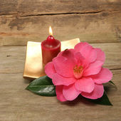 Small candle and Camellia — Stock Photo
