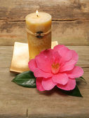 Feng Shui candle and camellia — Stockfoto
