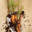 Carrots and trowel — Stock Photo