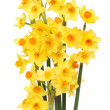 Narcissus flowers — Stock Photo #38430491