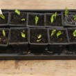Stock Photo: Seedlings