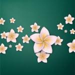 Pink plumeria (frangipani) flower background. — Stock Vector