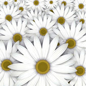 Field of white daisy flowers. — Stock Vector