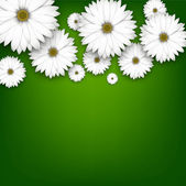 Field of white daisy flowers on green. — Stock Vector