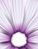 Purple osteospermum (daisy) background. — Stock Vector