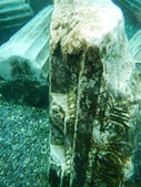 Top of an Ancient Column now Underwater — Stock Photo