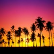 Silhouetted of coconut tree during sunset — Stock Photo #16847407
