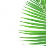 Palm Leaf — Stock Photo #16848397