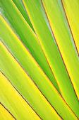 Banana stem stripe — Stock Photo