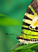 Krásný motýl — Stock fotografie