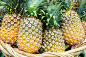 Tropical pineapples — Stock Photo