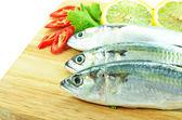 Close up fresh raw mackerel — Stock Photo