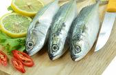 Fresh raw mackerel — Stock Photo