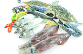 Various seafood — Stock Photo