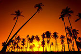 Coconut tree silhouette — Stock Photo