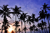 Silhouetted of coconut — Stock Photo