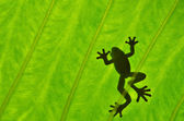 Silhouetted frog — Stock Photo