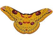 Papillon jaune isolé — Photo