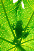 Silhouetted of frog — Stock Photo