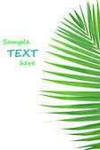 Green leaf Pattern — Stock Photo
