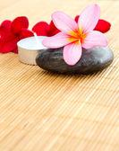 Pink plumeria flower — Stock Photo