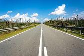 Road at palm oil plantations — Stock Photo