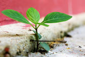 Plant break through — Stock Photo