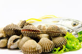 Fresh raw clams — Stock Photo