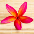 Plumeria flower on bamboo mat — Stock Photo