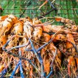 Stockfoto: Grilled shrimp on grate