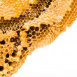 Sweet honeycombs with honey, isolated on white — Stock Photo #31838997