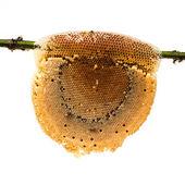ハニカム蜂蜜と竹の枝、白で隔離されるに蜂 — ストック写真
