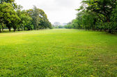 Green grass field in big city park — Stock Photo