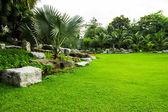 Green grass field in park — Stock Photo