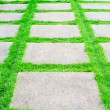 Green grass growth between cement walkway — Stock Photo #31852929