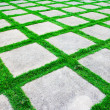 Green grass growth between cement walkway — Stock Photo #31853083
