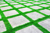 Green grass growth between cement walkway — Stock Photo