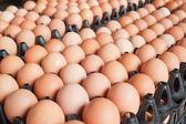 Mnoho hnědá vejce v krabicích. — Stock fotografie