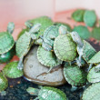 Small green turtle — ストック写真 #31999641