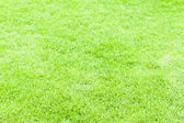 Green grass texture for web or sport — Stockfoto