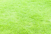 Green grass texture and background for web an sport — Stock Photo