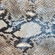 Snake skin pattern texture background — Stock Photo