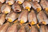 Peixe seco gourami — Foto Stock