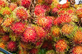 Tropical Fruit,Rrambutan. — Stock Photo