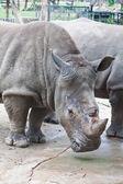 Rhino — Stockfoto