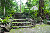 Walk way in Namtokphlio National Park,Chantaburi Province, ,Thai — Стоковое фото