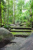 Walk way in Namtokphlio National Park,Chantaburi Province, ,Thai — Stock Photo