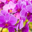 Stock Photo: Beautiful purple orchid close up